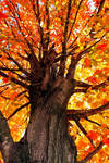 Fall Colors by flowerhippie22