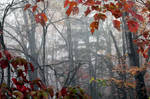 The Mist by flowerhippie22
