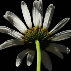 Flower Butt by flowerhippie22