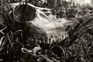 Death amd Decay by flowerhippie22