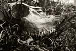 Death amd Decay