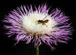 Full of Pollen by flowerhippie22