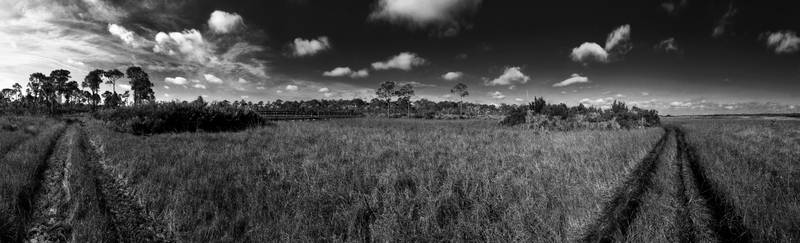 Savannas Preserve Black and White