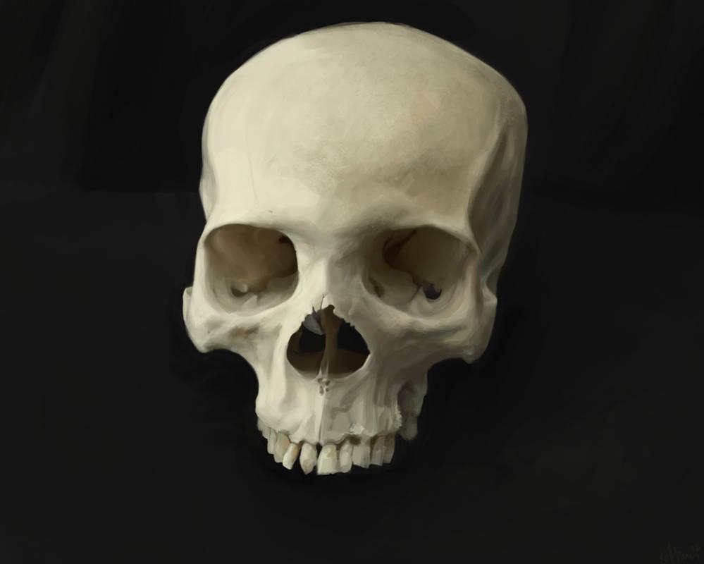 Skull study by theLateman