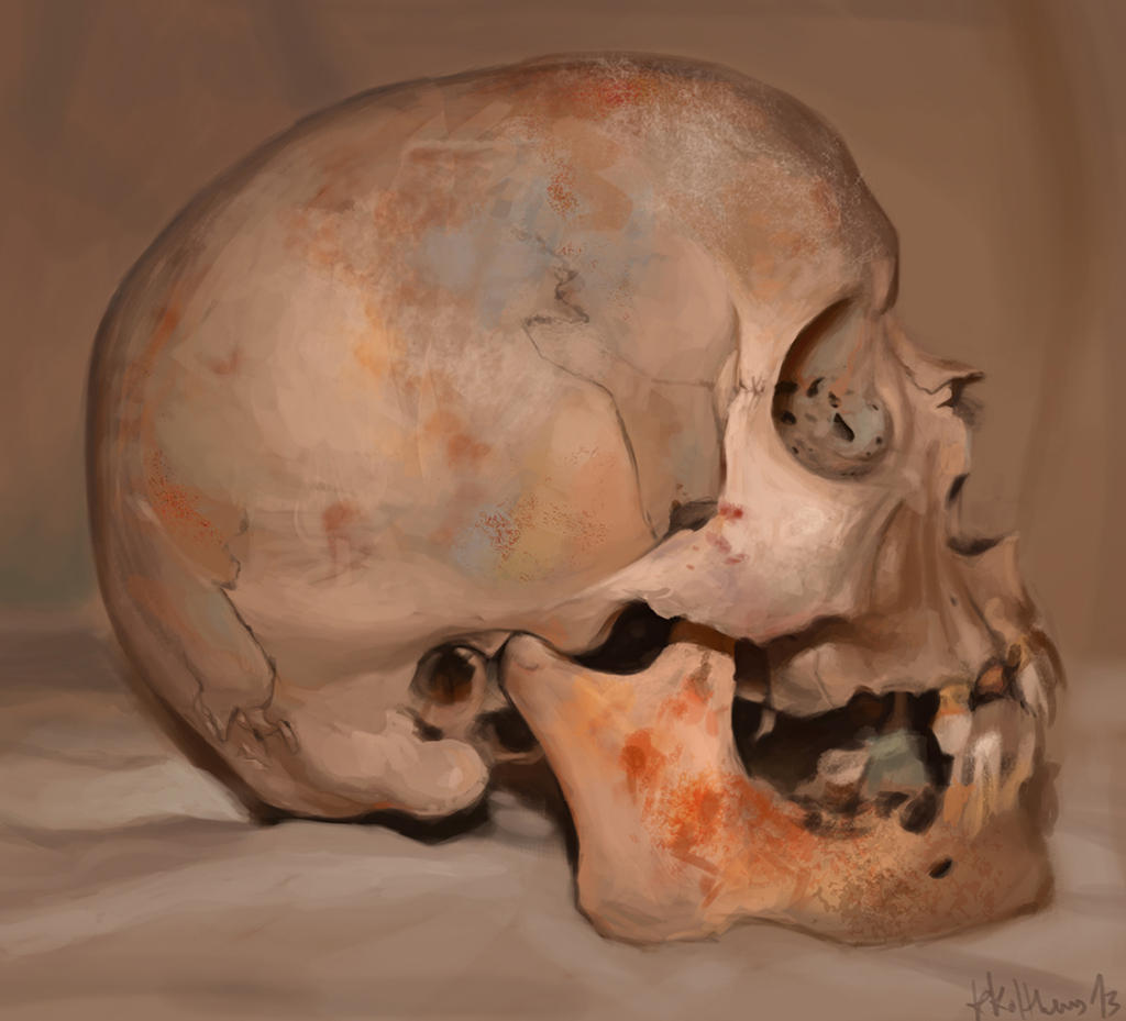 Skull study 02 by theLateman