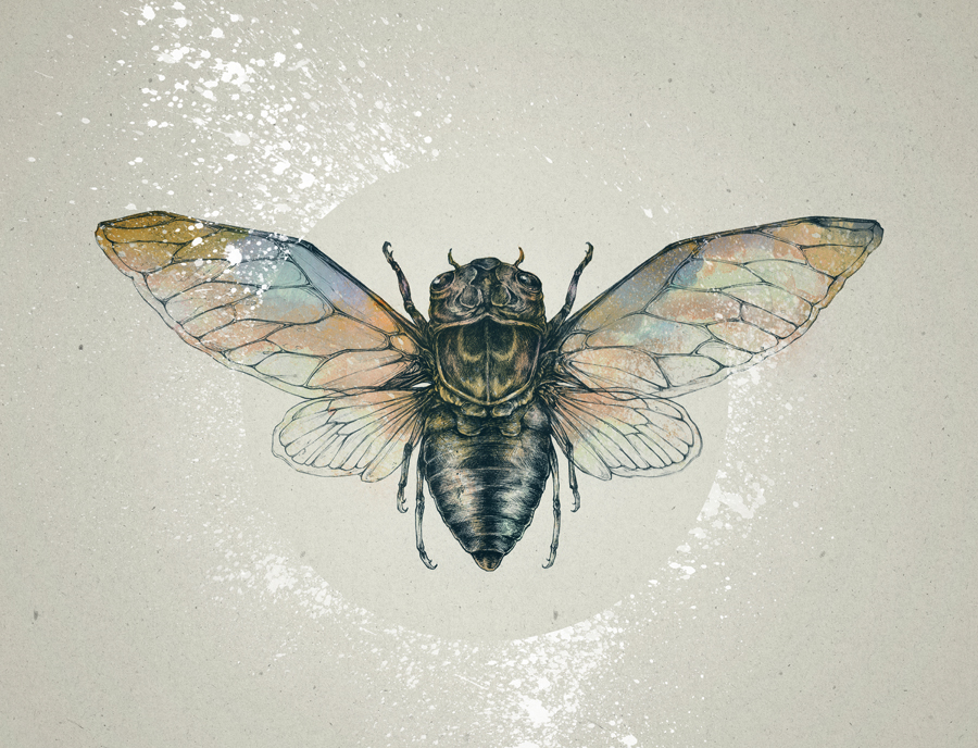 cicada by teaganwhite