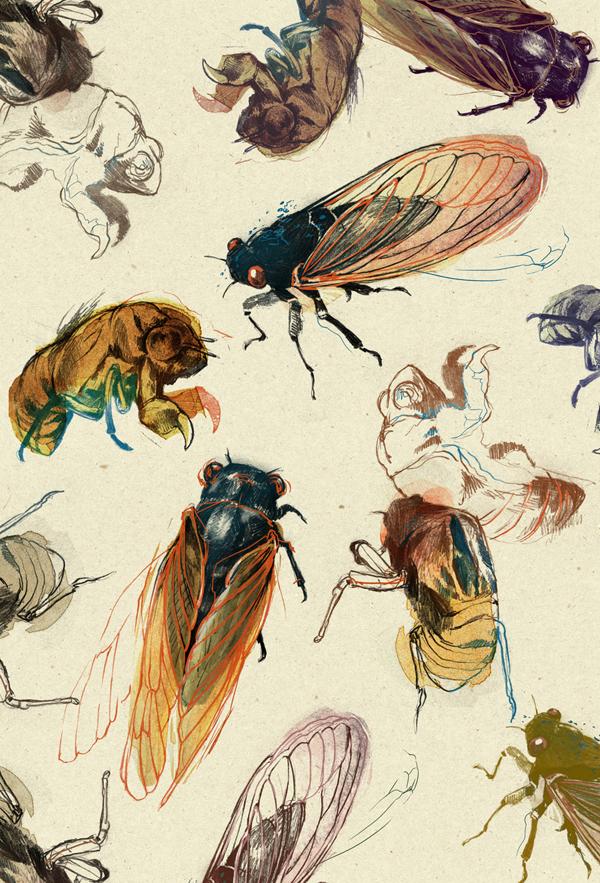 Summer Cicadas by teaganwhite