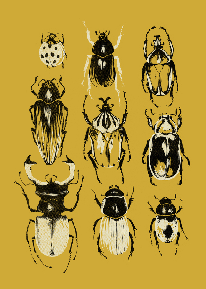 Gold Beetle Collection by teaganwhite