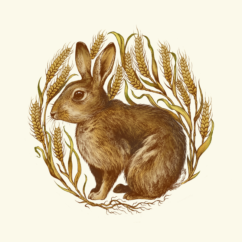Rabbit in Wheat by teaganwhite