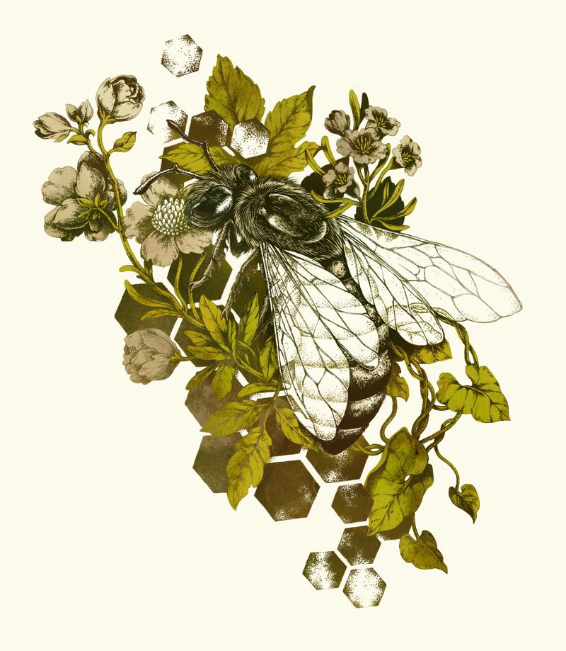 Honeybee by teaganwhite