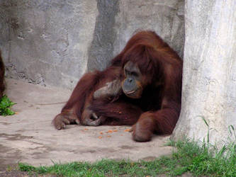 Sitting around, eating Cheetos