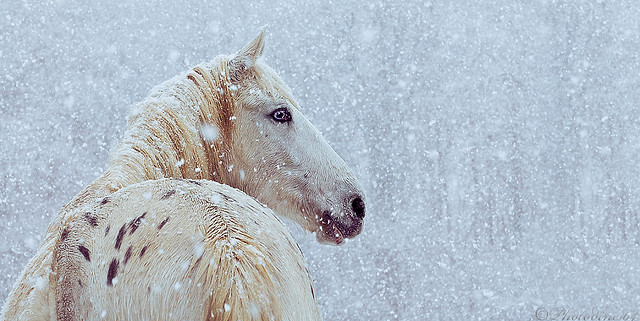 Fallen Snow by Marndi