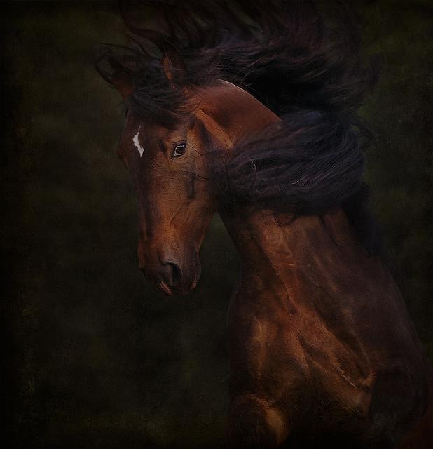 Whiplash by Marndi
