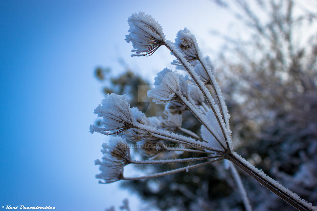 Wintery close up 5 by Riddseh