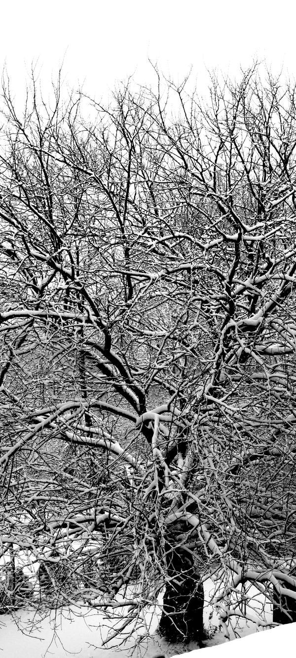 Winter Tree by HEMIII