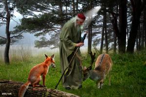 Forest Wizard by Rowdy-Dawg
