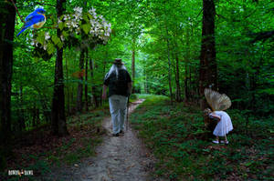 Typical Forest Walk
