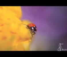 LadyBird... by nimitnigam