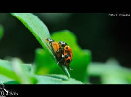 Ladybug's... by nimitnigam