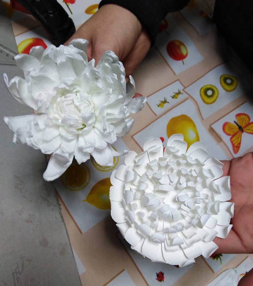 2 types of chrysanthemums by Samy-Consu