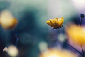 Just Like A Dream ... by Hazel-Photography