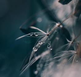 Fragile by Hazel-Photography