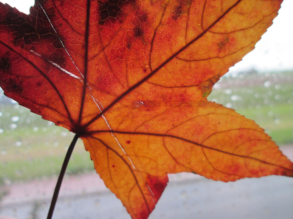 The colour of a rainy day by AmdirBrethil