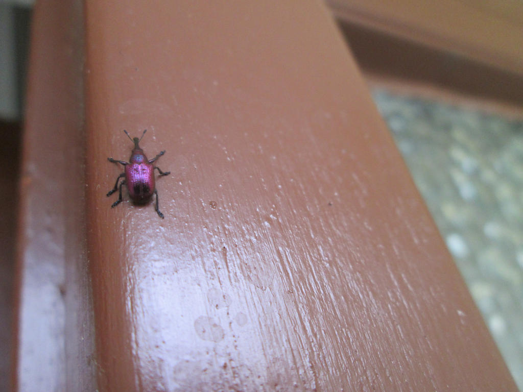 Bug detected by AmdirBrethil