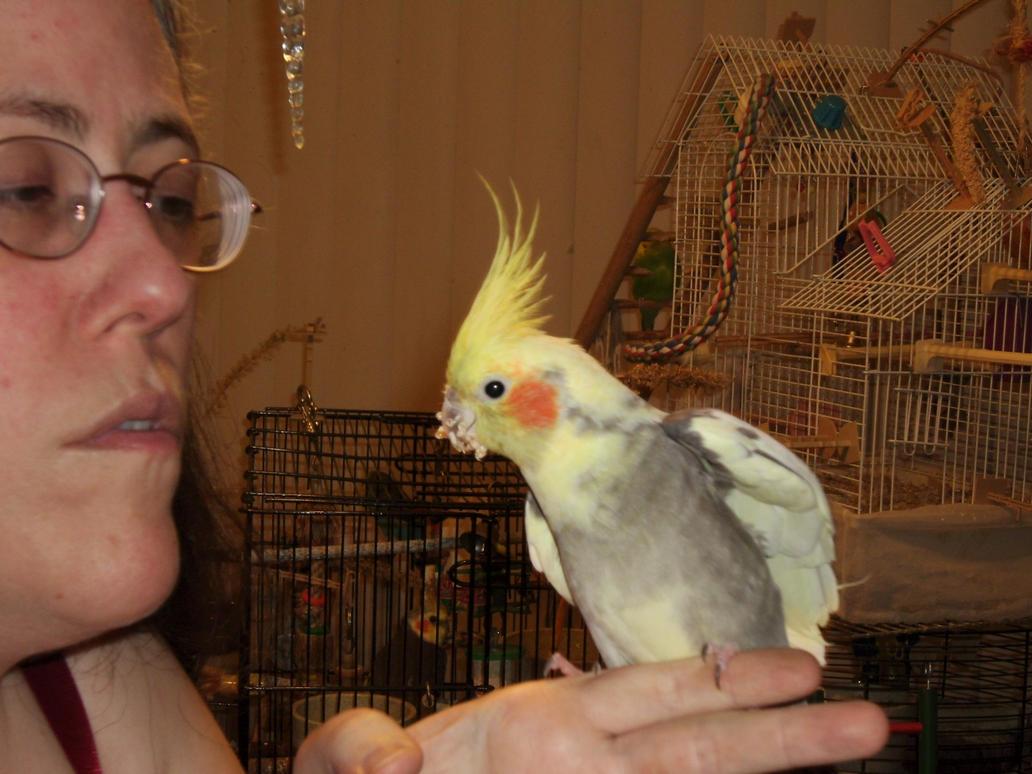 Seedy Bird 1 by Windthin