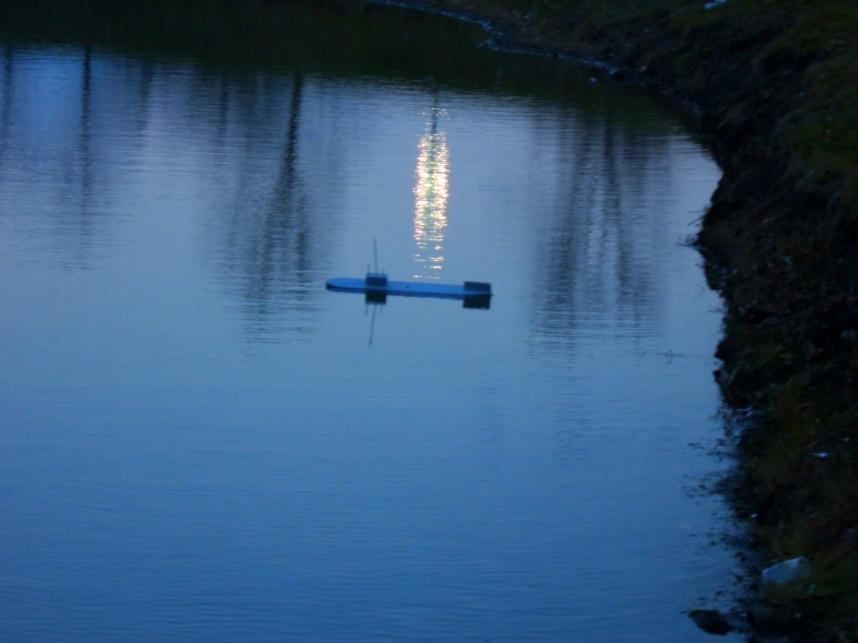 Sunset Stalker by Windthin