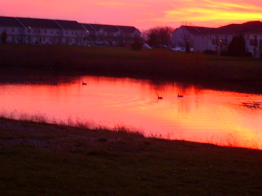 Geese in a Fall Sunset 1 by Windthin
