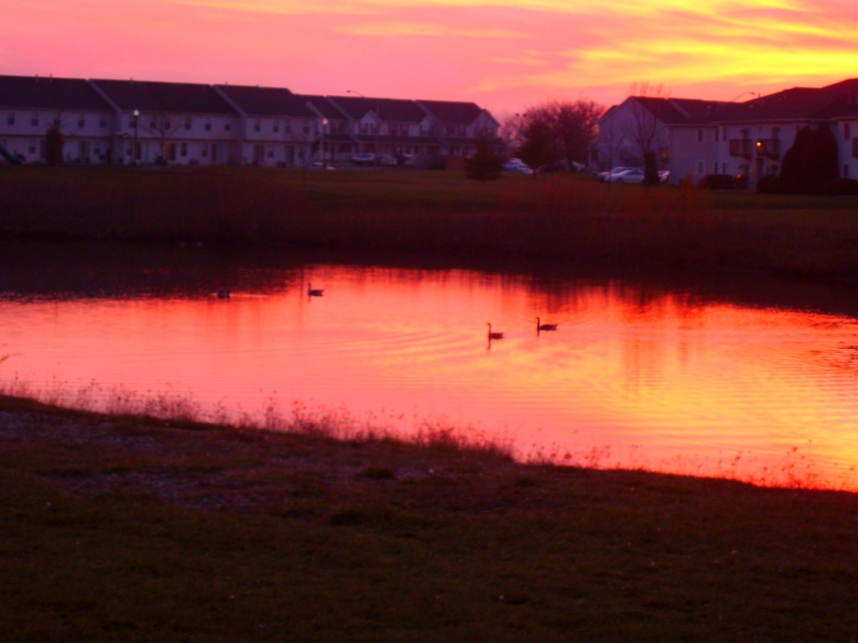 Geese in a Fall Sunset 2 by Windthin