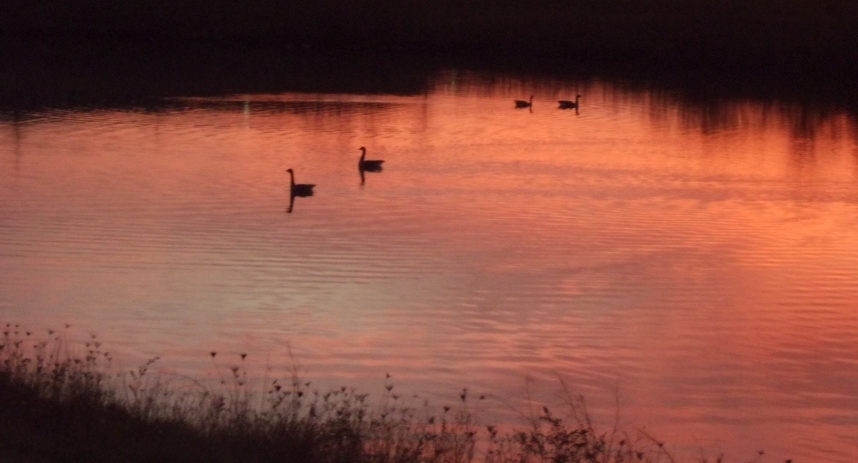 Geese in a Fall Sunset 3b by Windthin