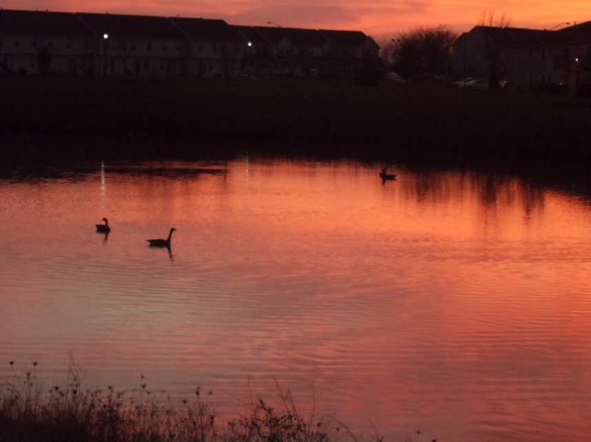 Geese in a Fall Sunset 4 by Windthin