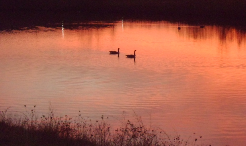 Geese in a Fall Sunset 5a by Windthin
