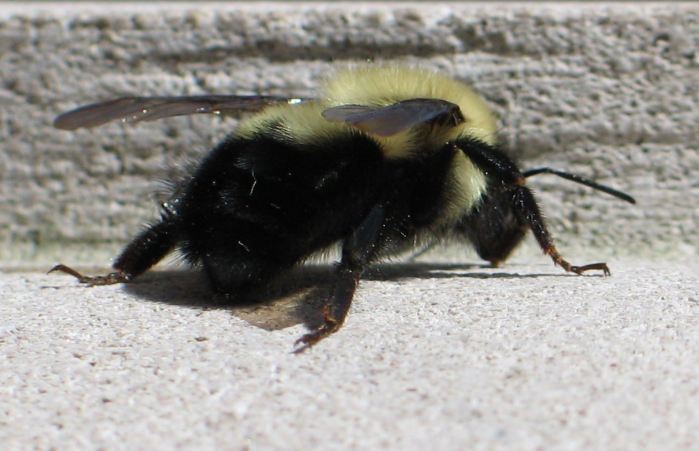 Lost Little Bee 3 by Windthin
