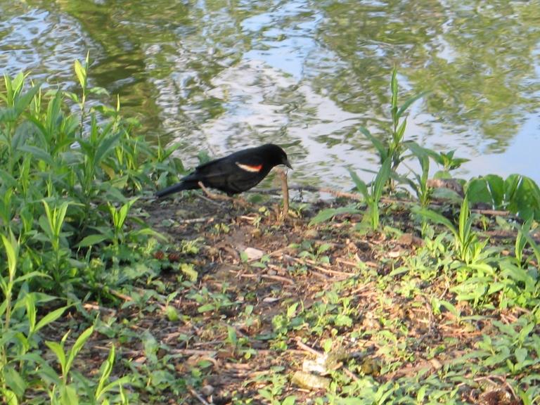 Blackbird Art And Crafts Carmel Ca
