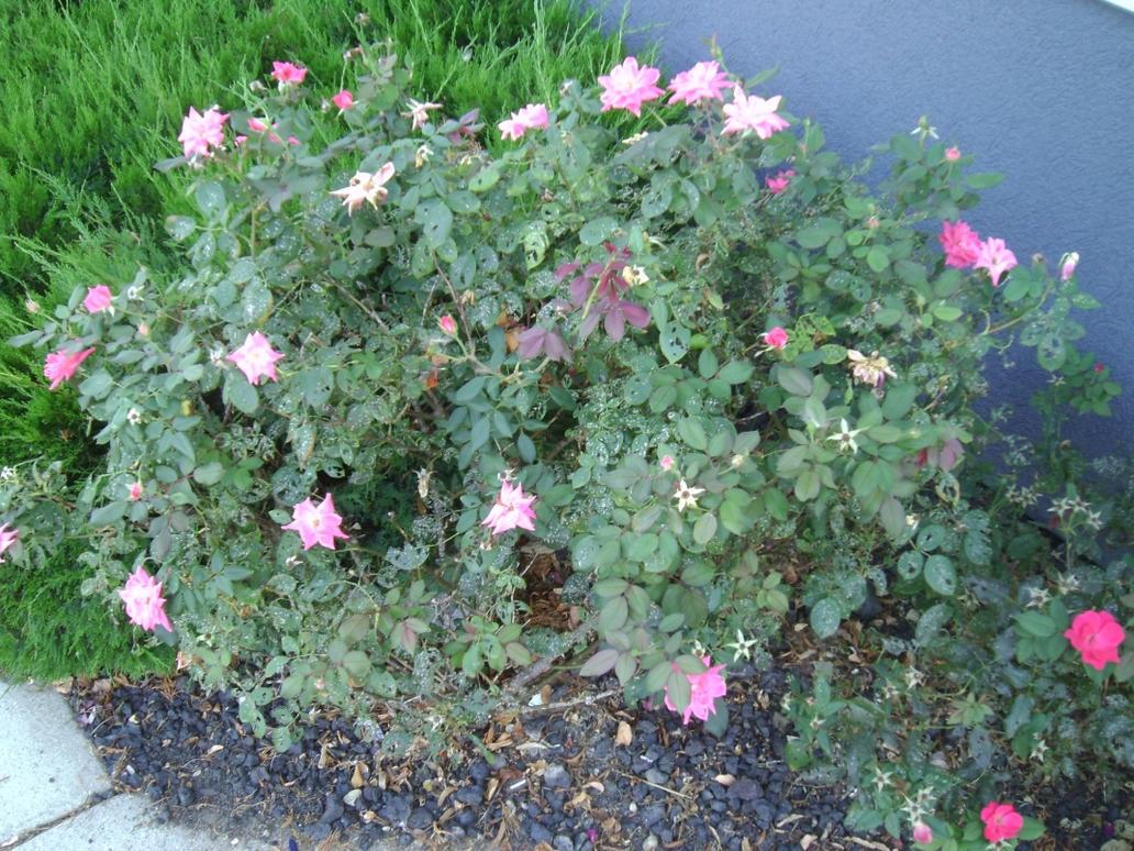 Pink Flower Bush by Windthin