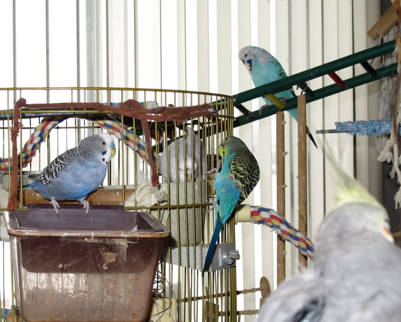 The Budgie Flock 2 by Windthin