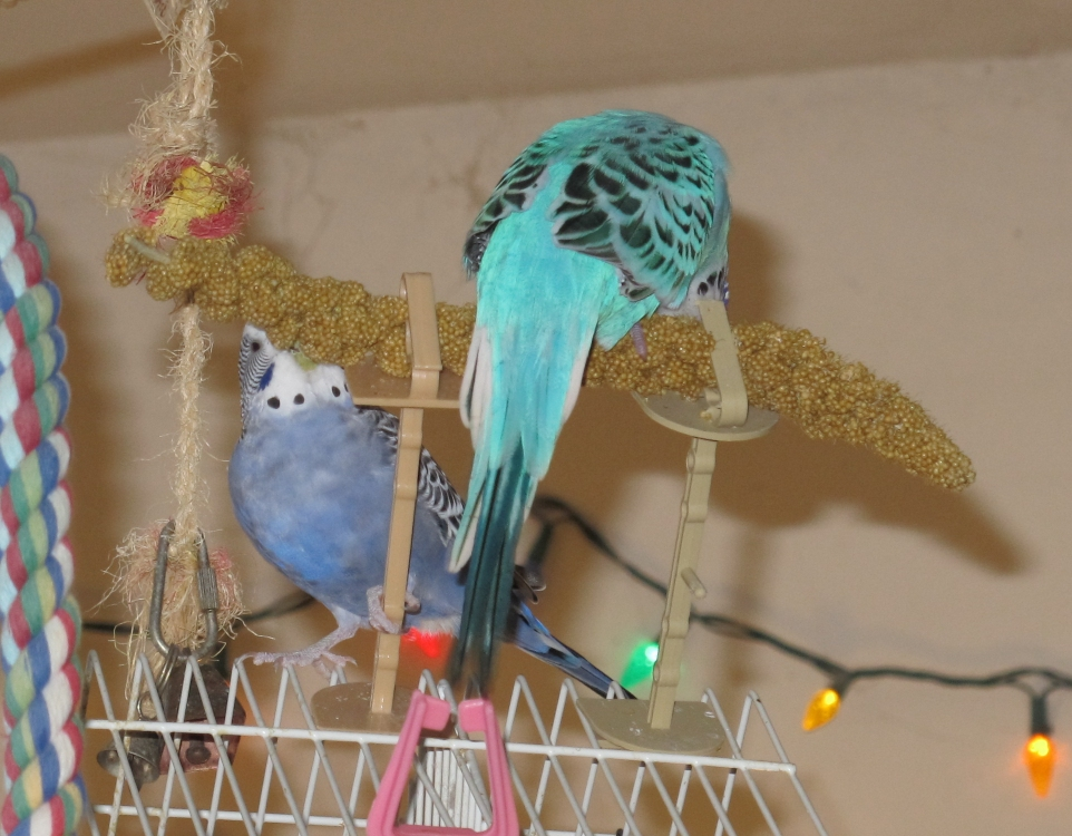 Jimmy and Clark Have Millet by Windthin