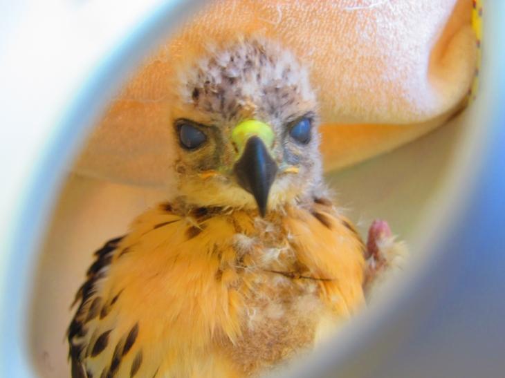 A Little Bit of Hawk 3 by Windthin