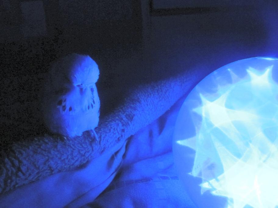 Blue Jimmy 1a by Windthin