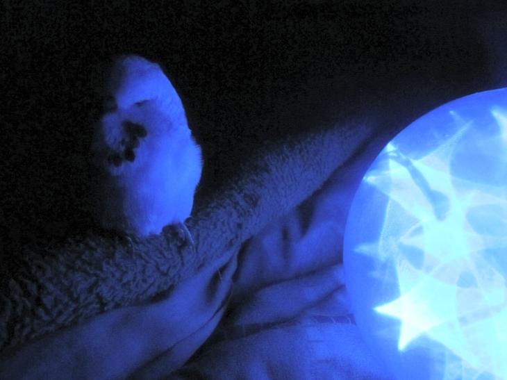 Blue Jimmy 3 by Windthin