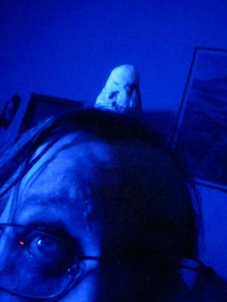 Blue Jimmy 6 by Windthin