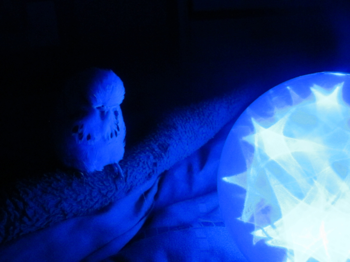 Blue Jimmy 1 by Windthin
