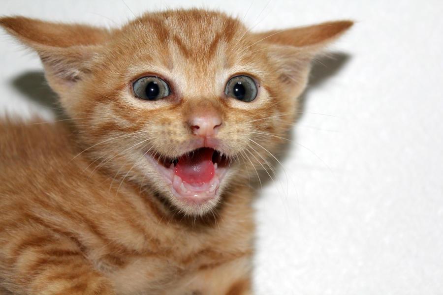 Evil Kitten! by firenze-design