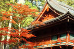 Toshogu Shrine 1