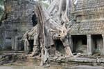 Tree Temple 2