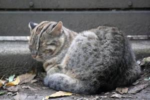 Sleepy Kitty by firenze-design