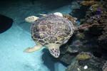 Sea Turtle Stock 2
